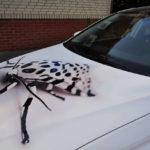 Оклейка авто пленкой с рисунком по низкой цене в Москве — «Измени Авто»